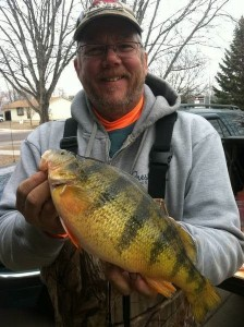 Massive Perch Wallijig
