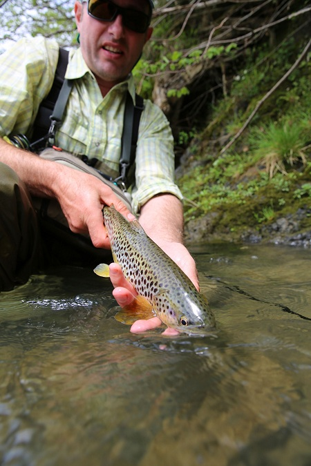 Releasing a brown trout